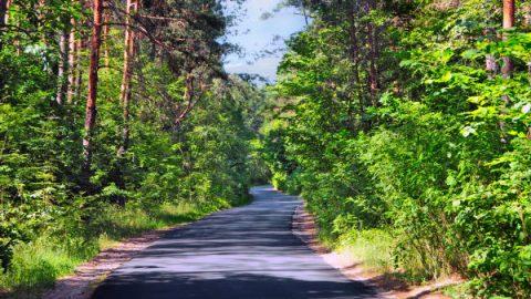 Поїздка до польського лісу може дорого коштувати необізнаному водієві