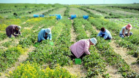 Польським фермерам розписали карантинну процедуру для сезонних працівників з-за кордону